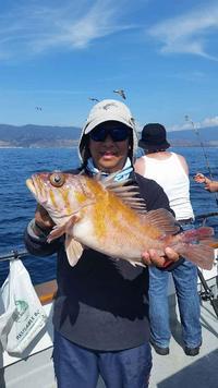 10.17.15 Rockfish Yellowtail Lingcod Channel islands-4