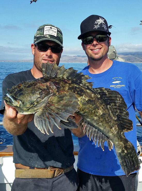 10.17.15 Rockfish Yellowtail Lingcod Channel islands-5