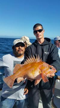 11.1.15 Nice Fish, Hard Work Channel Islands-2