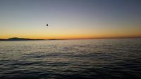 11.7.15 Lingcod Frenzy Santa Barbara, Channel Islands-1