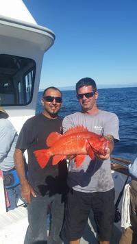 11.7.15 Lingcod Frenzy Santa Barbara, Channel Islands-4