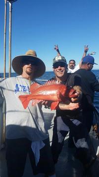 11.7.15 Lingcod Frenzy Santa Barbara, Channel Islands-6