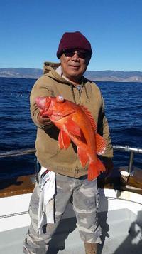 12.4.15 rockfish limits-5