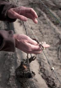 Foxen Vineyard & Winery