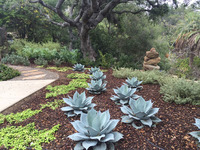 Park Hill - A Garden with Succulents, Views, and Playful Stone Sculptures-17