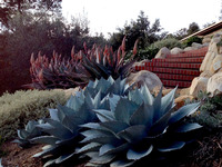 Park Hill - A Garden with Succulents, Views, and Playful Stone Sculptures-18