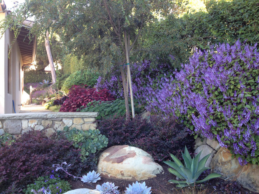 Channel drive pat brodie landscape design santa barbara Channel 7 home and garden