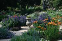 Penny Lane - Classic Mediterranean Garden-1