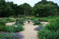 Penny Lane - Classic Mediterranean Garden-2