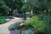 Penny Lane - Classic Mediterranean Garden-3