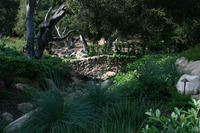 Penny Lane - Classic Mediterranean Garden-6