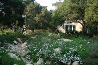 Penny Lane - Classic Mediterranean Garden-8