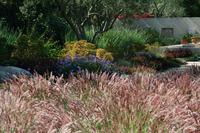 Penny Lane - Classic Mediterranean Garden-9