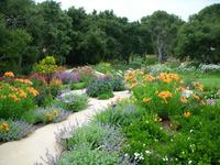 Penny Lane - Classic Mediterranean Garden-10