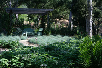Penny Lane - Classic Mediterranean Garden-11