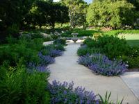 Penny Lane - Classic Mediterranean Garden-12