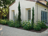 Penny Lane - Classic Mediterranean Garden-13