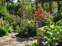 Edible - Vegetables, Cut Flowers, and Chickens-7