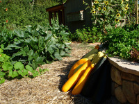 Edible - Vegetables, Cut Flowers, and Chickens-8