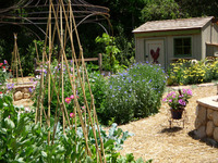 Edible - Vegetables, Cut Flowers, and Chickens-12