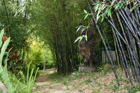 Buena Vista - A Pacific Rim Garden, Bamboo, Koi and Lotus-9