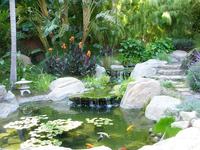 Buena Vista - A Pacific Rim Garden, Bamboo, Koi and Lotus-14