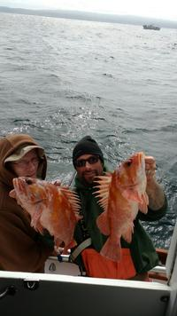 Quality Fish-3