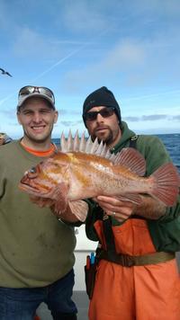 Quality Fish-4