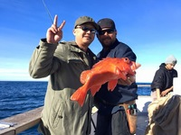 Coral Sea Local 3/4 day fishing-1