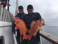 Limits at the Channel Islands-Coral Sea-6