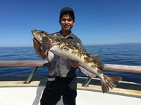 Lingcod Bite on the Coral Sea!-4