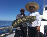 Lingcod Bite on the Coral Sea!-7