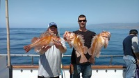 Stardust rockfish Limits up the Coast-1