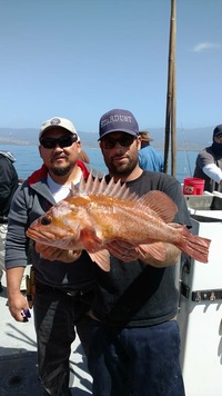 Stardust rockfish Limits up the Coast-2