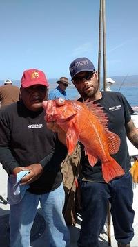 Stardust rockfish Limits up the Coast-3