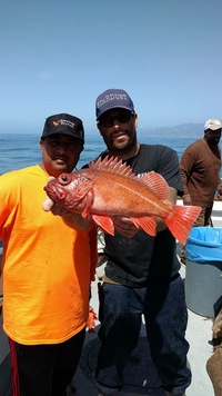 Stardust rockfish Limits up the Coast-5