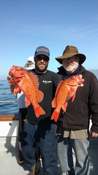 Stardust rockfish Limits up the Coast-8