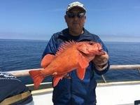 Coral Sea Killer day at Santa Rosa Island-9