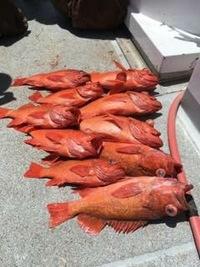 Coral Sea Killer day at Santa Rosa Island-21