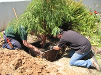 San Marcos Growers and Bartlett Tree Experts