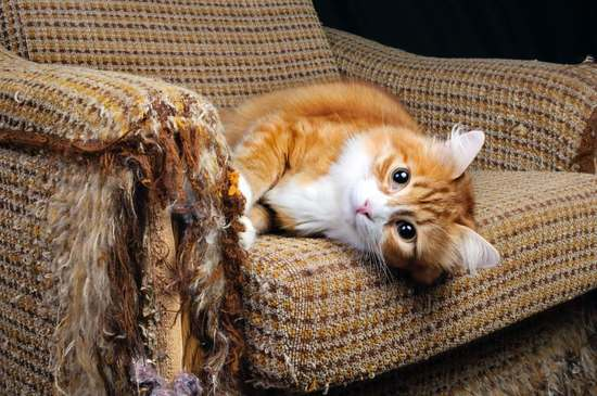 How to Prevent Cat Damage and Odors