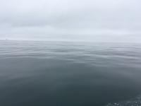 Coral Sea 6.23.16 1/2 day-1