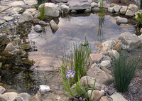 Ponds & Streams Featured Slideshow Image 1