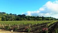 Santa Barbara Wine Tour - Chardonnay - Pinor Noir