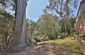 Park-Like Setting - Backyard/Open Space