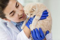 Carpinteria Santa Barbara Veterinarians Vaccinations