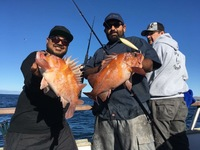 Coral Sea 11.29.16 3/4 day