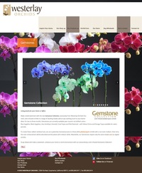 Westerlay Orchids Gemstones Page