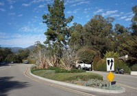 Hermosillo Road Traffic Calming Plantings Montecito Foundation1