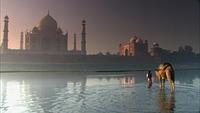 Taj Mahal (6)